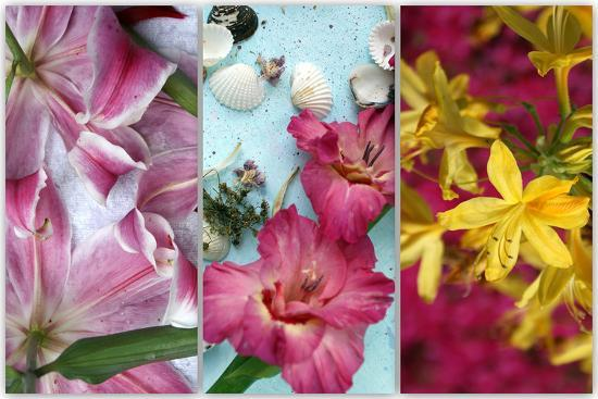 Tryptich from Gladiolus and Different Lilies-Alaya Gadeh-Photographic Print