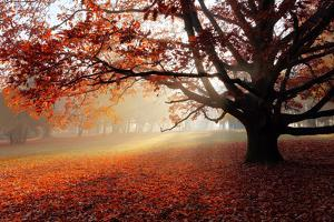 Alone Tree in Autumn Park by TTstudio