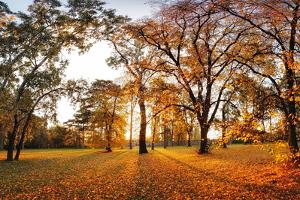 Autumn Panorama in Park by TTstudio