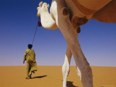 https://imgc.artprintimages.com/img/print/tuareg-guide-leads-his-camel-into-the-desert_u-l-p5x8od0.jpg?p=0