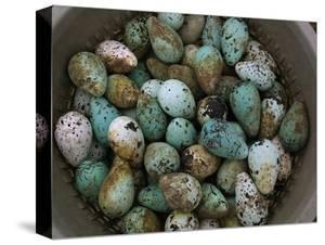 Tub of Guillemot Eggs