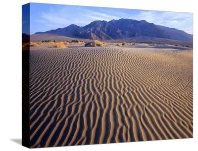 Tucki Mountain and Mesquite Flat Sand Dunes, Death Valley National Park, California-Tim Fitzharris-Stretched Canvas Print