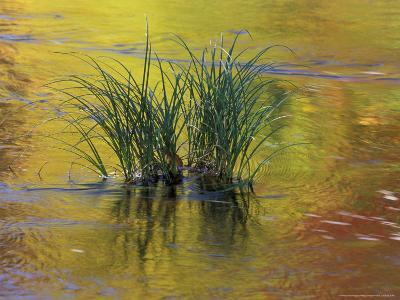 Tuft of Grass in Deerfield River, Green Mountain National Forest, Vermont, USA-Adam Jones-Photographic Print