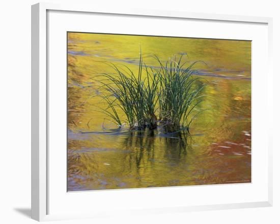 Tuft of Grass in Deerfield River, Green Mountain National Forest, Vermont, USA-Adam Jones-Framed Photographic Print