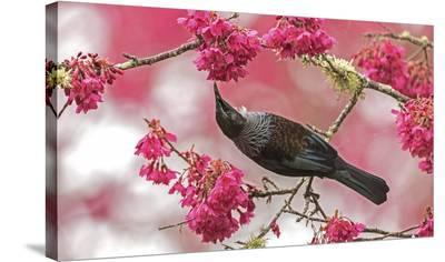 Tui 39-Kurien Yohannan-Stretched Canvas Print