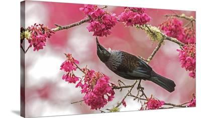 Tui 39-Kurien Yohannan-Stretched Canvas Print