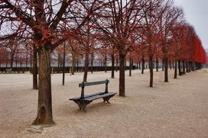 Tuileries Gardens in Winter, Paris, Ile de France, France