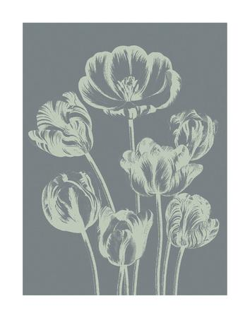 https://imgc.artprintimages.com/img/print/tulip-7_u-l-f8cp3a0.jpg?p=0