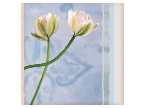 Tulip and Blue Tapestry II-Richard Sutton-Art Print