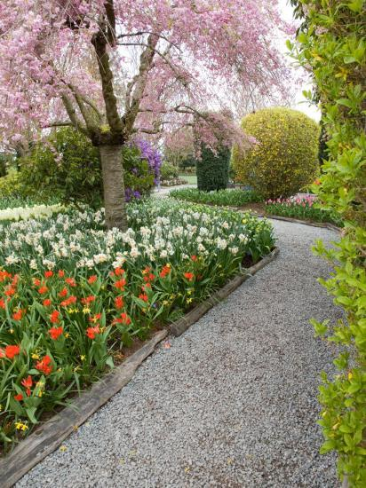 Tulip and Daffodil Garden at Tulip Festival, Skagit Valley, Washington-Jamie & Judy Wild-Photographic Print