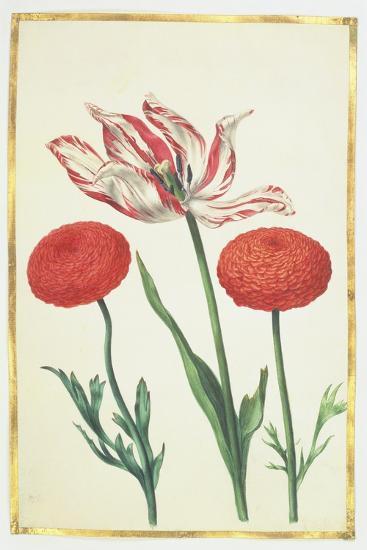 Tulip and Dahlias, C.1675-Nicolas Robert-Giclee Print