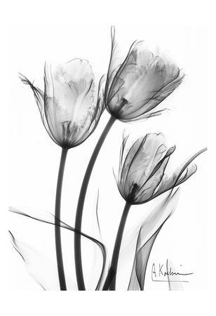 https://imgc.artprintimages.com/img/print/tulip-arrangement-in-black-and-white_u-l-f548ef0.jpg?p=0
