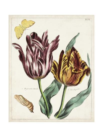 Tulip Classics II-0 Unknown-Art Print