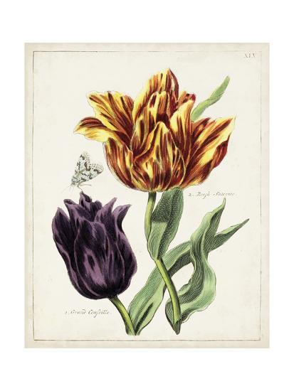 Tulip Classics III-0 Unknown-Art Print