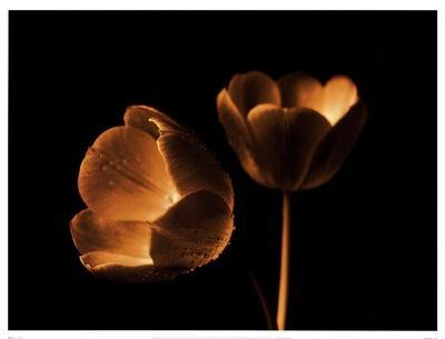 https://imgc.artprintimages.com/img/print/tulip-duo_u-l-f8im9m0.jpg?p=0