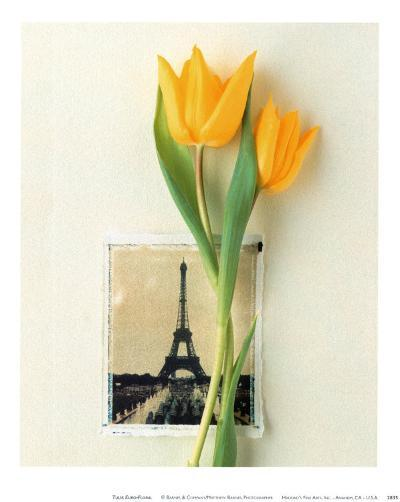 Tulip, Euro-Floral-Dorothy Gaubert Pyle-Art Print