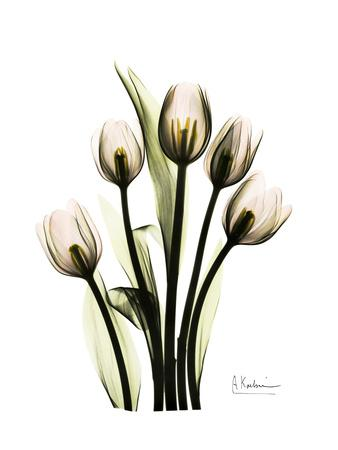 https://imgc.artprintimages.com/img/print/tulip-family-portrait_u-l-pyk18y0.jpg?p=0