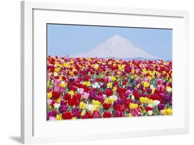 Tulip Field and Mount Hood-Craig Tuttle-Framed Photographic Print