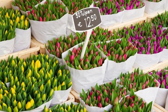 Tulip Flowers from Holland for Sale , Amsterdam Floral Market.-neirfy-Photographic Print
