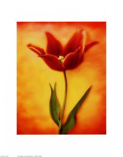 Tulip I-Christine Zalewski-Art Print