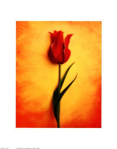 Tulip III-Christine Zalewski-Art Print