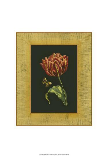 Tulip in Frame III--Art Print