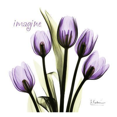 Tulip in Purple, Imagine-Albert Koetsier-Art Print