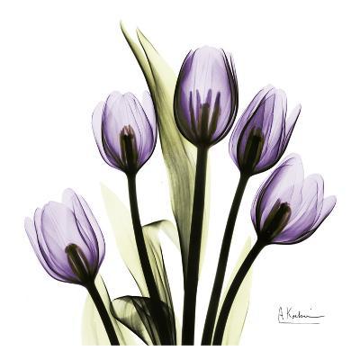Tulip in Purple-Albert Koetsier-Art Print