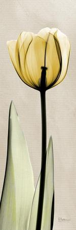 https://imgc.artprintimages.com/img/print/tulip-moment_u-l-pyjyhm0.jpg?p=0