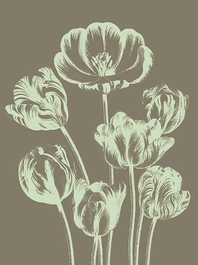 Tulip, no. 12--Art Print