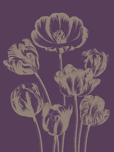 Tulip, no. 13--Art Print