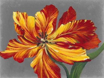 Tulip Portrait I-Tim O'toole-Art Print