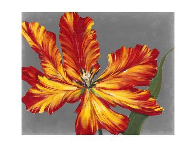 Tulip Portrait II-Tim O'toole-Art Print