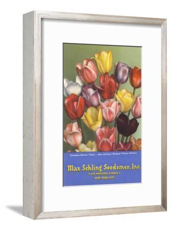 Tulip Seed Packet