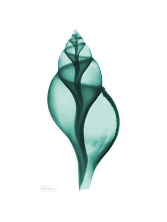 https://imgc.artprintimages.com/img/print/tulip-shell_u-l-pyjz780.jpg?p=0