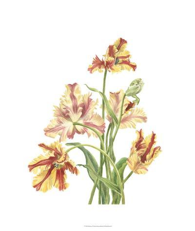 Tulip Spray I-Pamela Shirley-Limited Edition