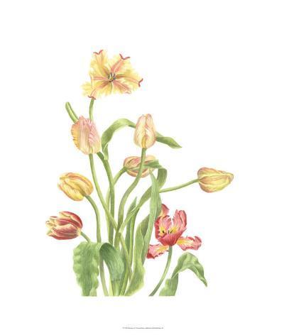 Tulip Spray II-Pamela Shirley-Limited Edition