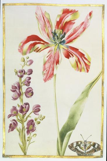 Tulip, Stocks and Butterfly, C.1675-Nicolas Robert-Giclee Print