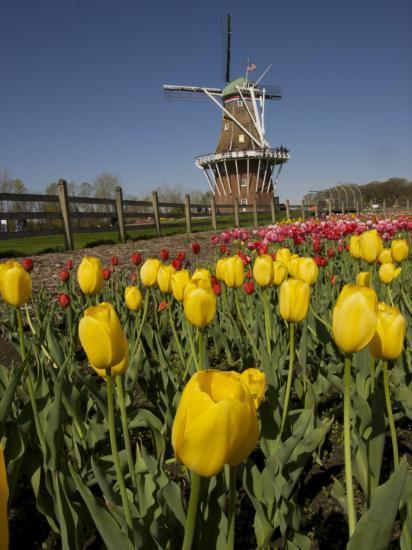Tulip Time in Holland, Michigan-Tim Laman-Photographic Print