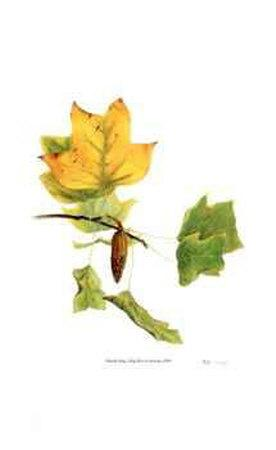 https://imgc.artprintimages.com/img/print/tulip-tree-in-autumn_u-l-eryqj0.jpg?p=0