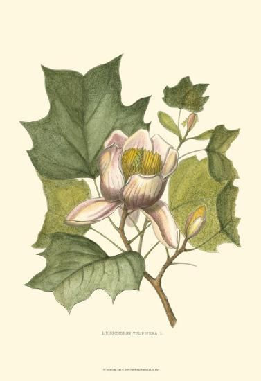 Tulip Tree--Art Print