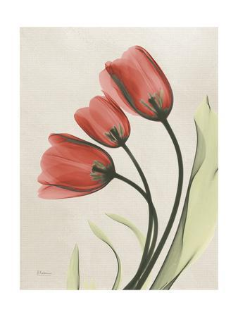 https://imgc.artprintimages.com/img/print/tulip-whisper_u-l-pyjpzj0.jpg?p=0