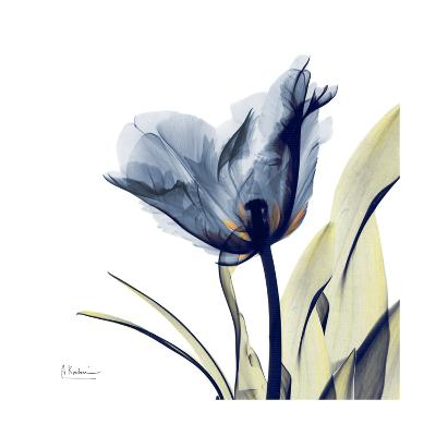 Tulip Whisper-Albert Koetsier-Art Print
