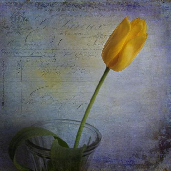 Tulip with Blue-Bob Rouse-Giclee Print