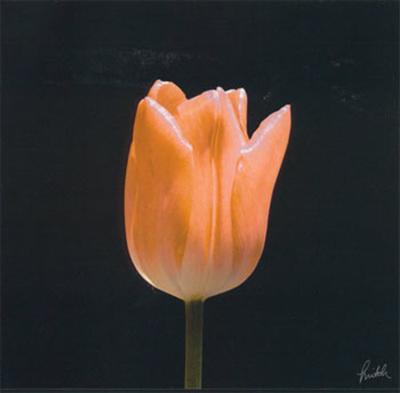 Tulip-Mitch Ostapchuk-Art Print