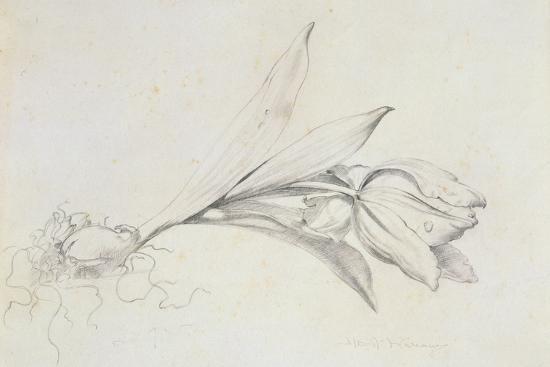 Tulip-Albert Williams-Giclee Print