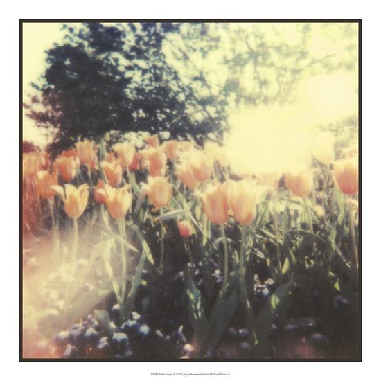 Tulipa Exposta II-Jason Johnson-Giclee Print