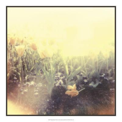 https://imgc.artprintimages.com/img/print/tulipa-exposta-iv_u-l-f5bwak0.jpg?p=0