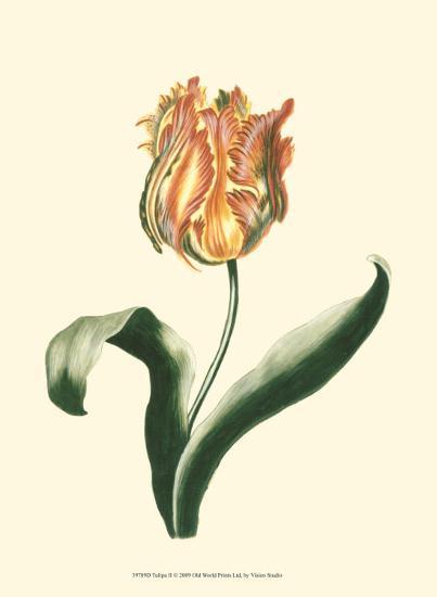 Tulipa II--Art Print