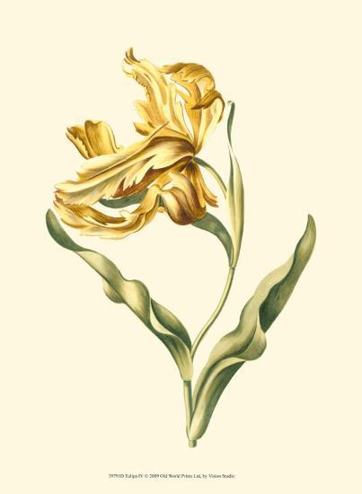 Tulipa IV--Art Print